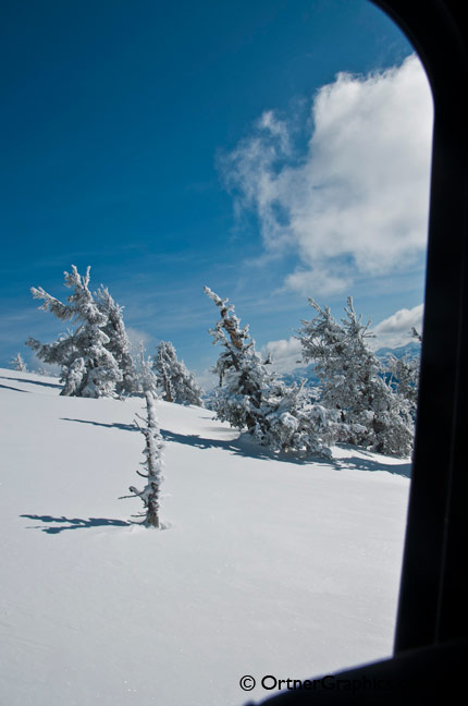 Photo looking out at snow covered trees from a snowcat